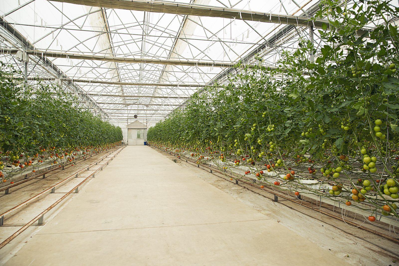 En temporada agrícola alta no puede faltar el alambre galvanizado para invernaderos - Trefilados Urbano